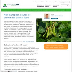 WAGENINGEN UNIVERSITY - 2014 - New European source of protein for animal feed