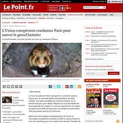 L'Union européenne condamne Paris pour sauver le grand hamster