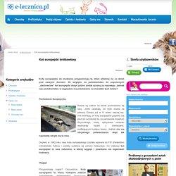 Kot europejski krótkowłosy - Porady dla właścicieli psów i kotów - Porady dla właścicieli psów i kotów