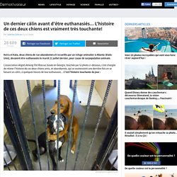 Un dernier câlin avant d'être euthanasiés... L'histoire de ces deux chiens est vraiment très touchante!