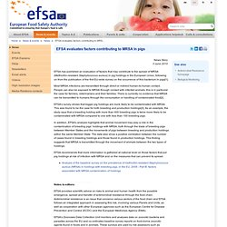 EFSA News Story: EFSA evaluates factors contributing to MRSA in pigs