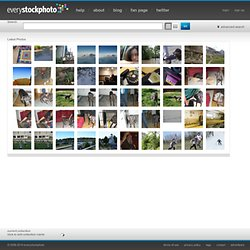 searching free photos