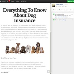 Everything To Know About Dog Insurance
