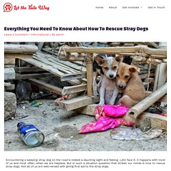 Everything You Need To Know About How To Rescue Stray Dogs
