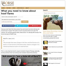 Everything You Need To Know About Hoof Flares