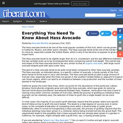 Get best organic avocados delivery service!
