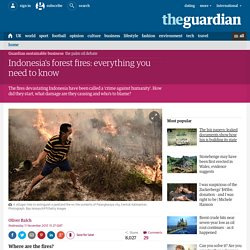 Indonesia's forest fires: everything you need to know