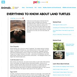 Everything to Know About Land Turtles