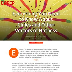 Everything You Need to Know About Chiles and Other Vectors of Hotness