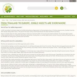 L'entomophagie dans le monde. Où son mangé les insectes comestibles ?Insectes comestibles : L'entomophagie en France et dans le Monde