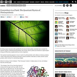 Everywhere in a Flash: The Quantum Physics of Photosynthesis | Wired Science