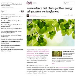 New evidence that plants get their energy using quantum entanglement