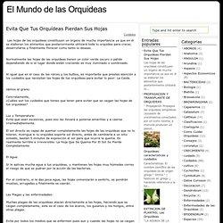 Evita Que Tus Orquídeas Pierdan Sus Hojas
