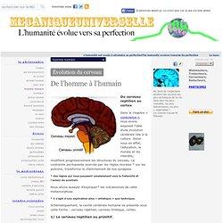 Du reptilien au cortex