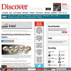 Hominid Skull Spurs Radical Rewrite of Human Evolution