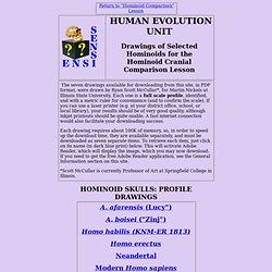 Evolution Extension: Hominoid Drawings