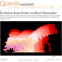 Evolution Runs Faster on Short Timescales