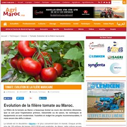 AGRIMAROC 29/12/17 Tomate: Evolution de la filière marocaine