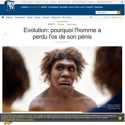 Evolution: pourquoi l'homme a perdu l'os de son pénis