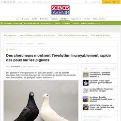 L'évolution incroyablement rapide des poux sur les pigeons