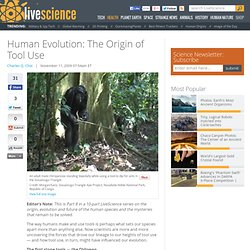 Human Evolution: The Origin of Tool Use