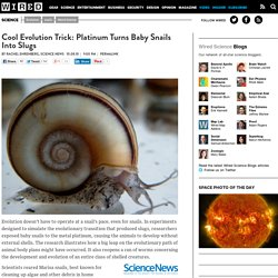 Cool Evolution Trick: Platinum Turns Baby Snails Into Slugs | Wired Science