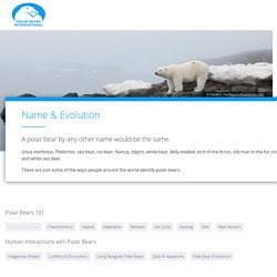 Name & Evolution - Polar Bears International