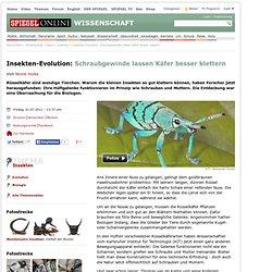 Insekten-Evolution: Schraubgewindelassen Käfer besser klettern - SPIEGEL ONLINE - Nachrichten - Wissenschaft
