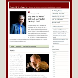 Home Page: Daniel E. Lieberman - Professor of Human Evolutionary Biology, Harvard University