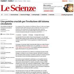 Una proteina cruciale per l'evoluzione del sistema circolatorio