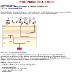 Evoluzione-Ominidi