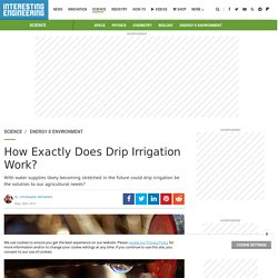 How Exactly Does Drip Irrigation Work?