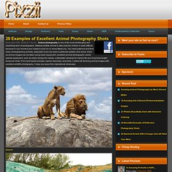 28 Examples of Excellent Animal Photography Shots | Pixzii