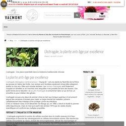 L'Astragale, la plante anti-âge par excellence - Herboristerie du Valmont