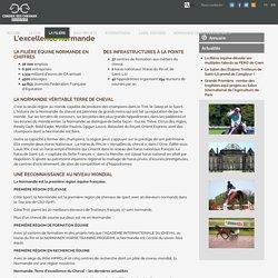 Le filière équine en Normandie - Conseil des chevaux Normandie