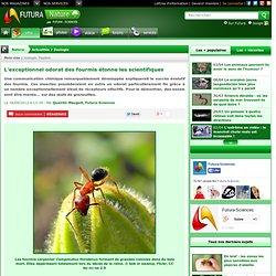 L'exceptionnel odorat des fourmis étonne les scientifiques