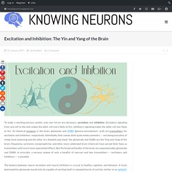 Excitation and Inhibition: The Yin and Yang of the Brain - Knowing Neurons