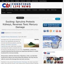 Exciting: Spirulina Protects Kidneys, Reverses Toxic Mercury Damage
