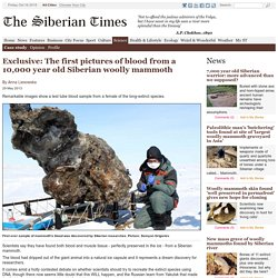 Exclusive: The first pictures of blood from a 10,000 year old Siberian woolly mammoth