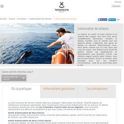 Baleines Tenerife. Excursions d'observation de cétacés