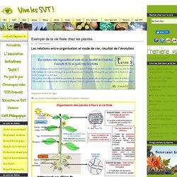 Exemple de la vie fixée chez les plantes - Bac SVT série S