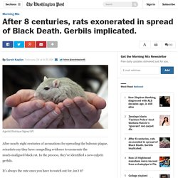 After 8 centuries, rats exonerated in spread of Black Death. Gerbils implicated.