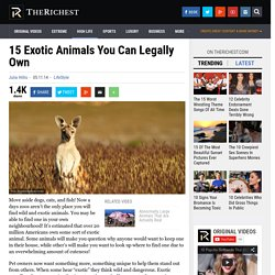 15 Exotic Animals You Can Legally Own
