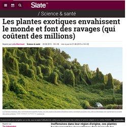 SLATE 20/08/15 Les plantes exotiques envahissent le monde et font des ravages (qui coûtent des millions)