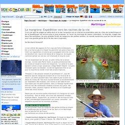 La mangrove: Expédition vers les racines de la vie - voyagecaraibe.com - Les Antilles en direct des Caraïbes