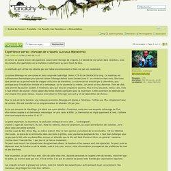 Forum Tanalahy - Expérience perso : élevage de criquets (Locusta Migratoria) : Alimentation