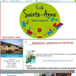 Expériences : plantations en TPS-PS-MS - Ecole Sainte-Anne