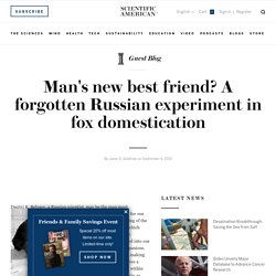 Man's new best friend? A forgotten Russian experiment in fox domestication - Guest Blog - Scientific American Blog Network