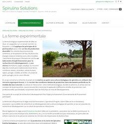 La ferme expérimentale - Spirulina Solutions