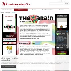 Experimentarium: The Brain